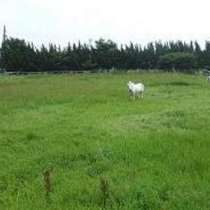 ポニーリンク(牧草地)